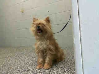 Will you save this dog's life? They need an adopter to save them or they may succumb to euthanasia at any time after the available date below (can be same or next day).  Remember - dogs in the shelter may be stressed or scared.  It's a frightening...