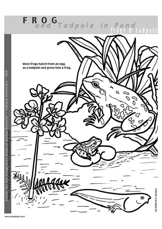 Coloring Page Frog Coloring Pages Color Free Coloring Sheets
