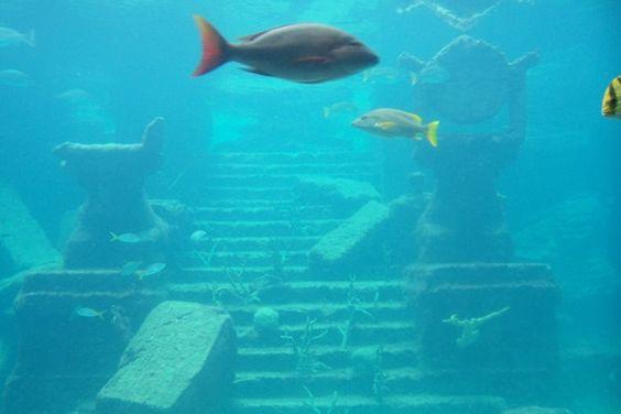 The Dig Atlantis, Atlantis Resort, Paradise Island, Bahamas Ancient ...