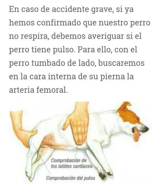 Comprobación De Pulso Perros Frases Perros Amor De Perro