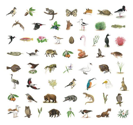 Carlos Velázquez es un guía excepcional para 'Mi primer cuaderno de campo de hábitats de España' (Ediciones SM), con texto de Fernando Bort.