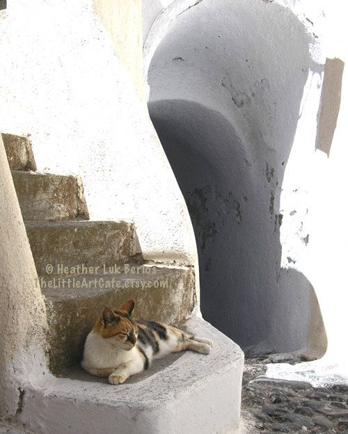 Greece Photography - Cat Resting On Stairs - Santorini - Wall Decor - Greek Mediterranean Fine Art Print. $20.00, via Etsy.