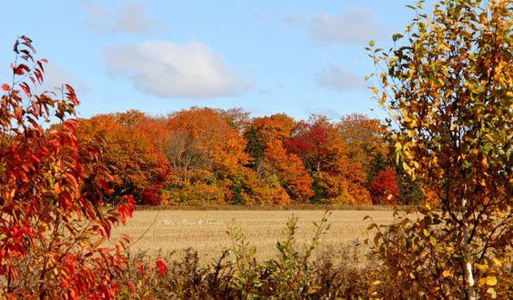 Aiken House & Gardens: An Island Autumn