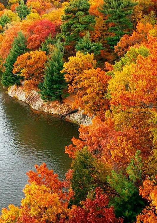 The spectacular colours of autumn.