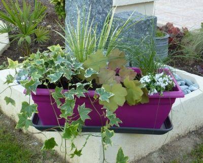 du pep 39 s pour l 39 hiver vous avez r alis une jardini re d 39 automne hiver jardini res. Black Bedroom Furniture Sets. Home Design Ideas