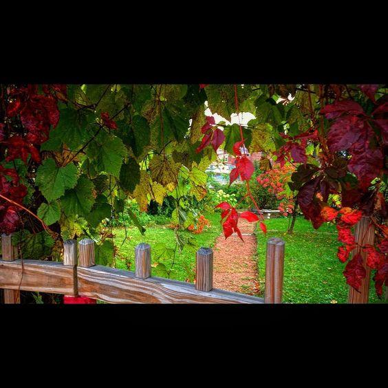 #fallcolors #autumn #walk #stillwatermn #mncommunity #minnesota #path #garden