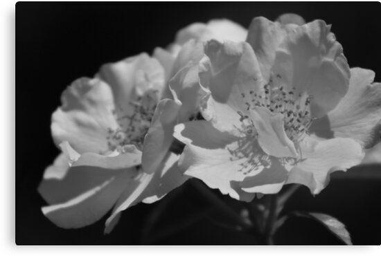 68baef4732e28251634ef6063d6dffcc - Ballet At Desert Botanical Gardens 2018