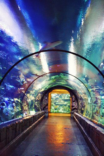 Mandalay sharks and las vegas nevada on pinterest for Discount aquarium fish and reef