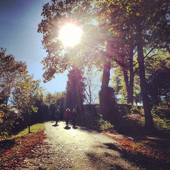 Güneş ağacına doğru... #karlshöhe #mystuttgart #stuttgart #0711 #sonbahar #autumn #almanya #gunes #agaclar #sun #gezgindirgezeninadi  #yerlisigibi #germany #reise #travel #seyahat #gezi