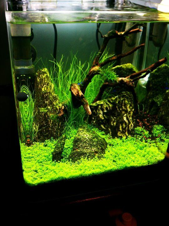Great grand aquascaping aquascaping pinterest photo for Natural fish tank