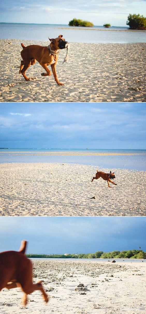 Hickam AFB Dog Beach #honolulu #oahu #hawaii #pearl #harbor