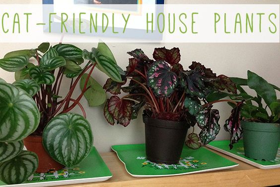 Pinterest the world s catalog of ideas - Good household plants ...