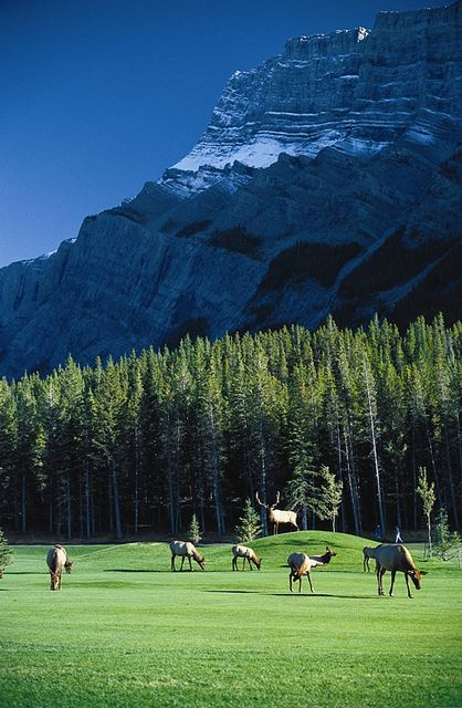 The Fairmont Banff Springs Golf Course