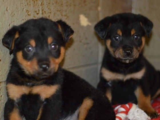 Bonni and Clyde -- saved!