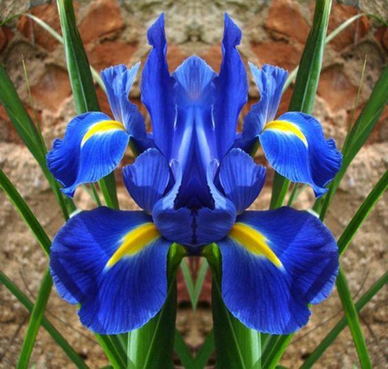 orquideas raras , Pesquisa Google