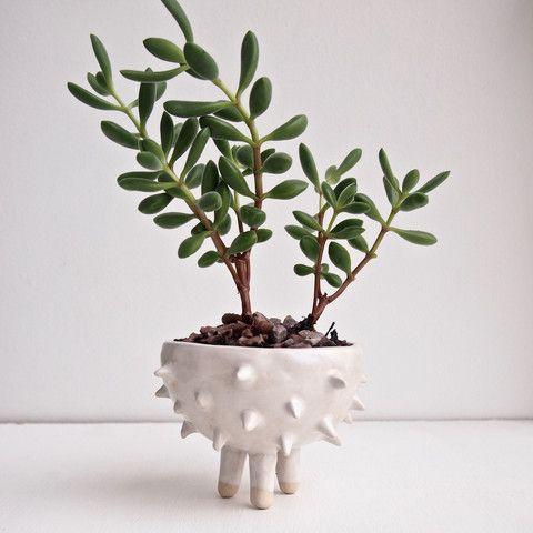 Medium handmade spiky planter with succulent by Kabinshop