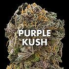 weed for sale online Contact us on www.weedplantdispensary.com  buy medical…