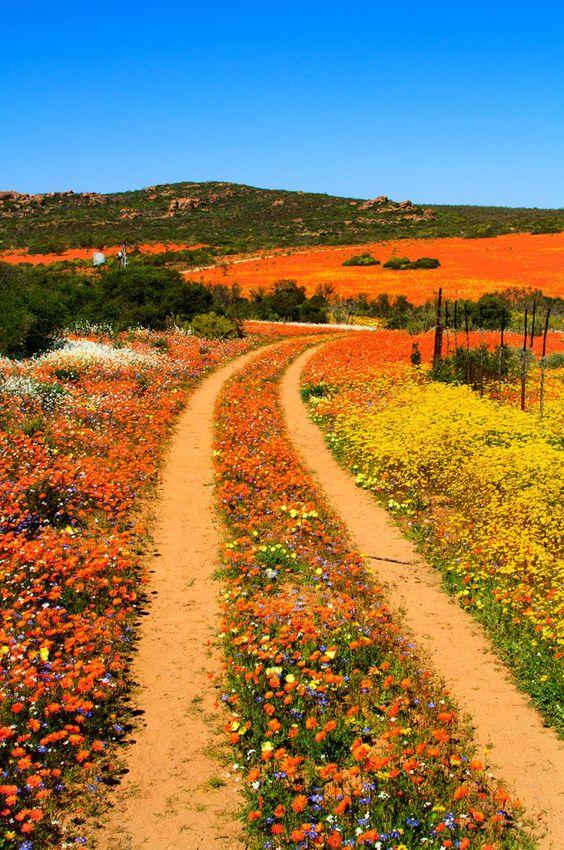 ナマクワランドの綺麗で美しい花畑