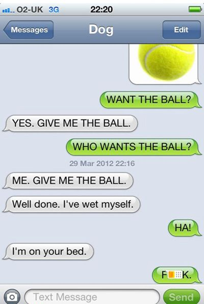 funny, funny pictures, funny photos, funny dogs, dog, If Dogs Could Text
