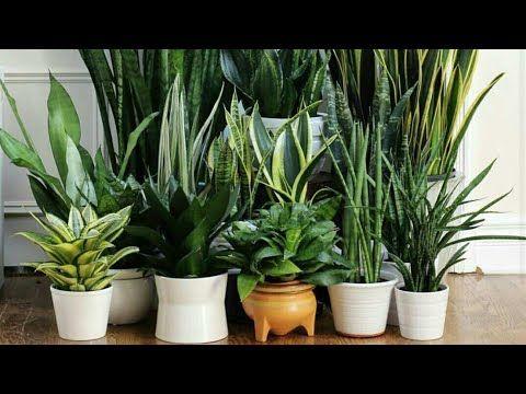 افضل عشرة نباتات داخلية لاتحتاج الى عناية كثيرة ومعلومات مفيدة ونبذه مختصره عن كل نبته فديو مهم جدا Youtube Potted Houseplants Indoor Plants Indoor Garden