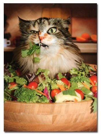 chat mange salade