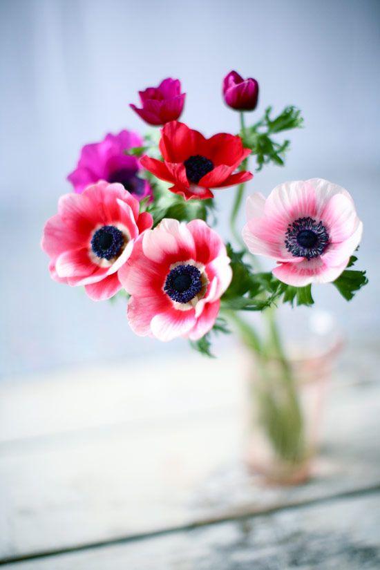 """Un bouquet d'anémones aux couleurs vives. Leur nom vient du grec """"anemos"""" qui signifie vent car elle semble s'épanouir au souffle du vent. La mythologie grecque raconte que le dieu des vents Zéphyr tomba amoureux de cette nymphe et que par jalousie son épouse la transforma en fleur 'infos sur Flowerness)."""