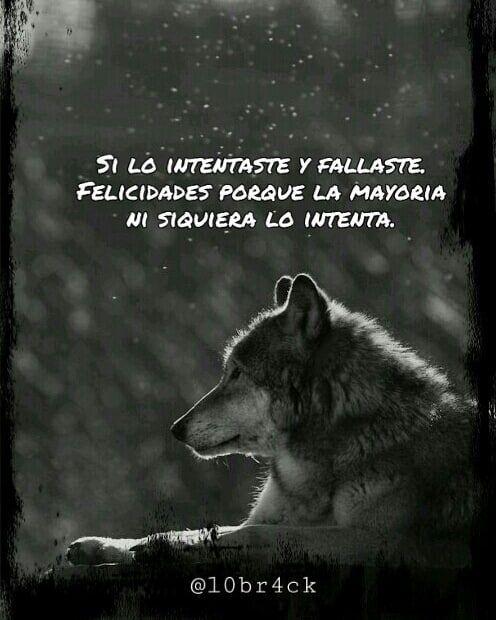 me gustan los retos y este es uno de ellos y tengo una persona muy  inteligente que me esta ayudando  as  Frases metaforicas Frases  inspiradoras Frases de lobos