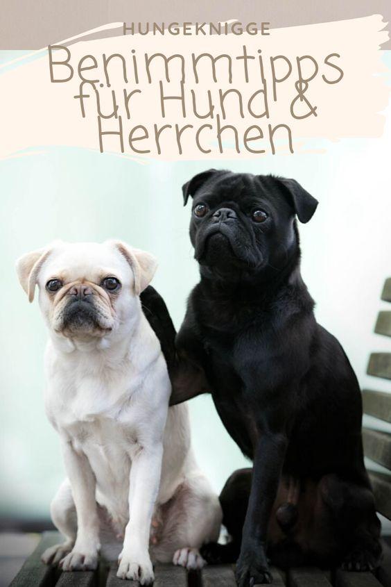 Benimmtipps für Hund & Herrchen, die ein Zusammenleben erleichtern!