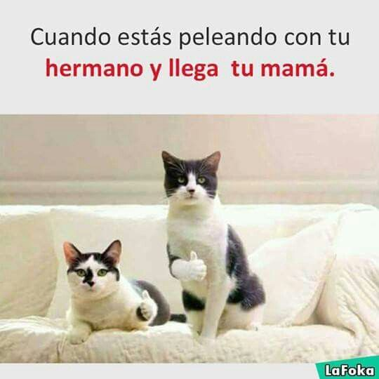 Pin By Moiki0002 On Tweets And Opinions Funny Spanish Memes Spanish Memes Memes