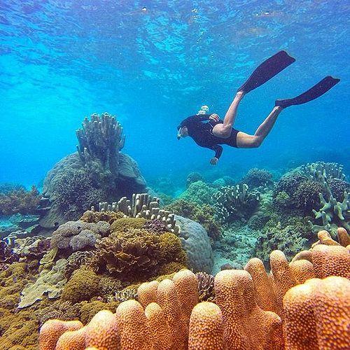 Indanya bawah air Indonesia Photo by: @ilhamarch Location: jikomalamo beach ternate Tag teman kalian yang ingin kamu ajak kesini -------------------------------------------- SHARE YOUR TRAVELLING EXPERIENCE WITH HASTAG #TRAVELLERSNUSANTARA: