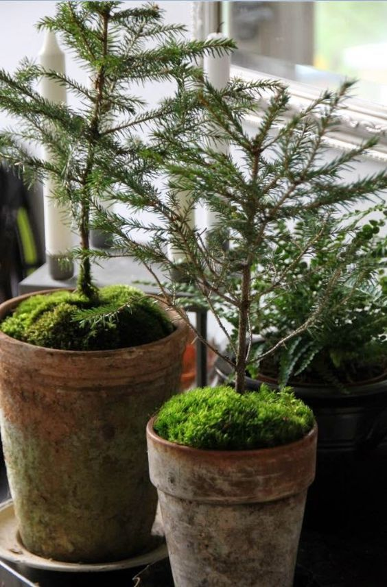 It's the time of the year when the sidewalks and shops are totally packed with a plethora of Christmas tree options. Standard or miniature, slim or full, the confusion after looking at the trees can leave even the most balance headed people dizzy. If you go by suggestion, how about opting for a...