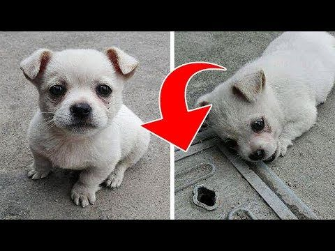 A Puppy Didn T Want To Move Away From This Manhole Then Its Owner