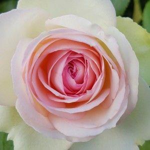Creazione e Tutela del proprio Spazio Personale e Aromaterapia | Migliora la tua vita con Aromaterapia e Profumeria botanica!