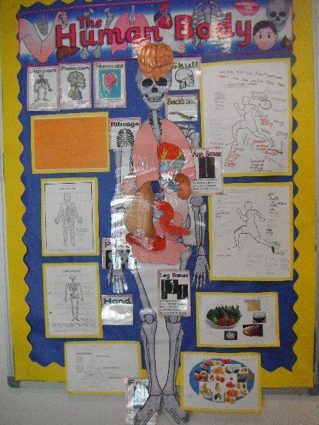 The Human Body classroom display photo - Photo gallery - SparkleBox