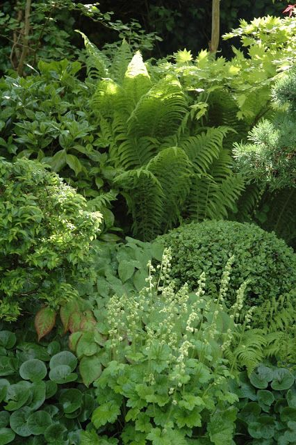 Shade garden with fern, boxwood, lady's mantel, wild ginger and more.