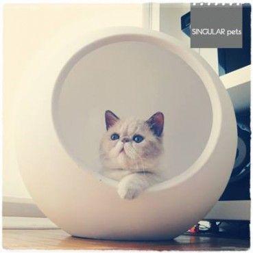 Niche maison design pour chat - BUBBLE