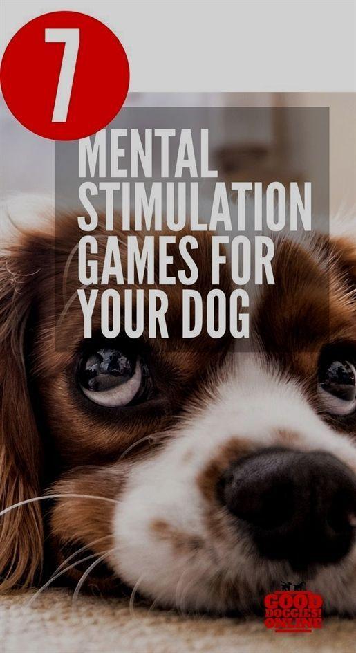 Dog Training Lubbock Sit Means Sit Dog Training Reviews Dog