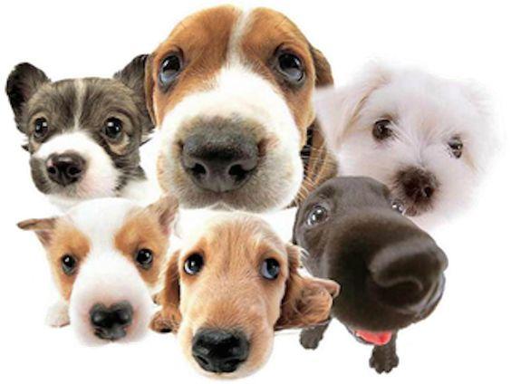 Animal Terra, Consejos para perros y resto mascotas, Clínica veterinaria