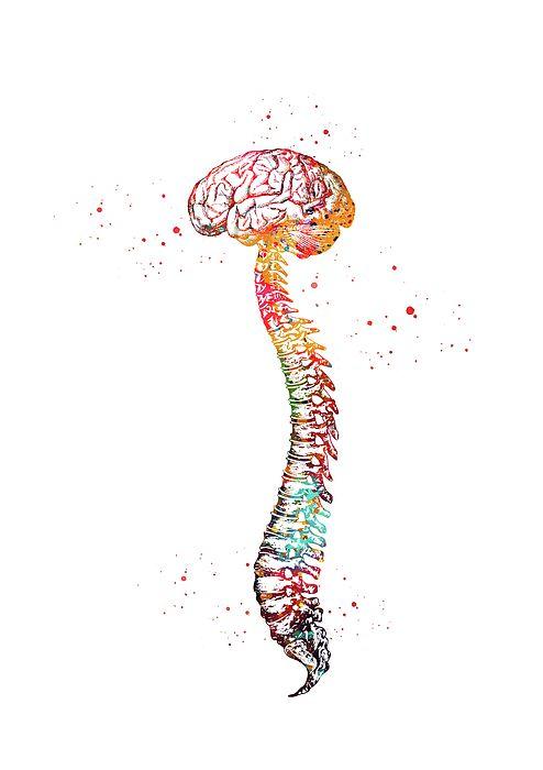 Pin By Black Window On Fineartamerica Brain Art Anatomy Art Medical Wallpaper