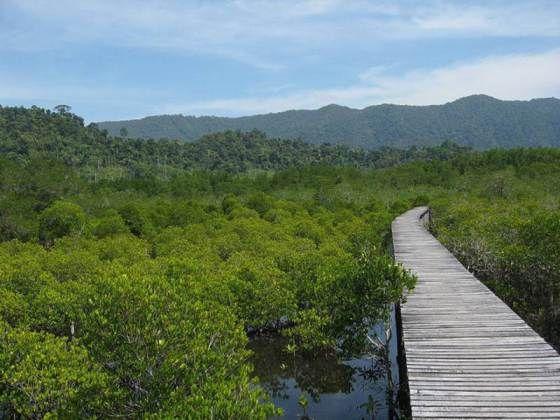 The Mangrove Walk - getting close to nature