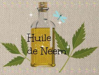 L'huile de neem : un insecticide puissant