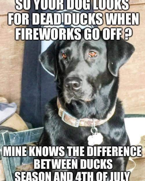 Pin By Kelly Schmitt On Hunting Fishing Memes Waterfowl Hunting Dog Quotes Hunting Quotes