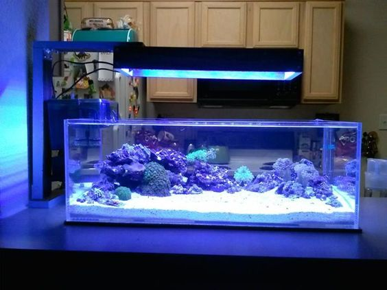 Check out this great custom build from baby tuna on nano for Aquarium recifal nano