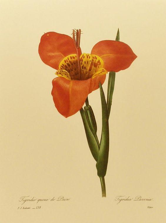 Flower Print, Vintage Botanical