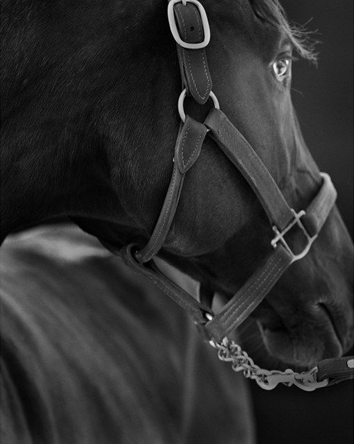 Zenyatta Photograph by Neil Latham
