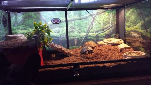 My redesigned tortoise house for my Russian tortoises, Boris and Natasha.   These are my first reptiles ever, so please comment if you have any ideas and tips for me, thanks!