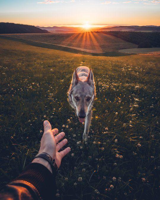 Man S Adorable Photo Series Shows Him Petting His Dog Around Czech Republic Wolf Dog Dog Photos Pets