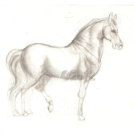 DaVinci's Horse, Original Sketch Drawing ($42) ❤ liked on Polyvore featuring home, home decor, wall art, acrylic wall art, pencil drawing, sketch drawing, hand drawing and horse home decor
