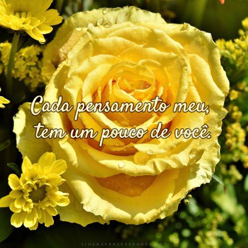 Frases De Amor Com Fotos De Rosas Rosas Amarelas Rosas Rosas