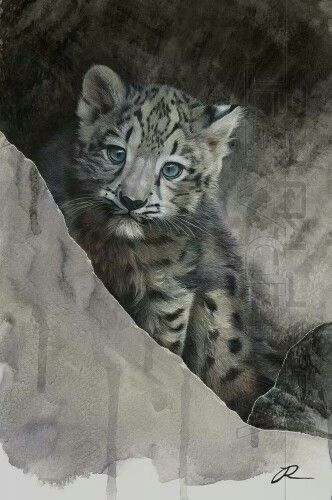 Snow leopard cub by Julia Ruffles